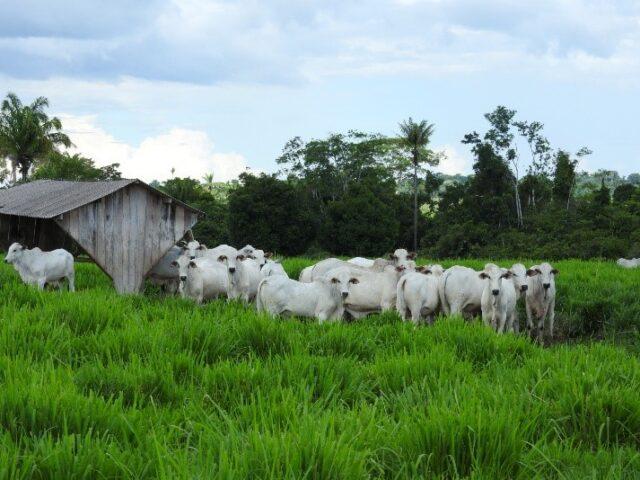 Oportunidade na pecuária